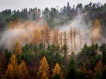 Orange träd i misten på stup arkivbild
