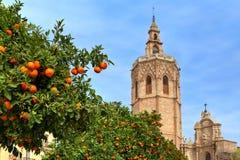 Orange träd och Valencia Cathedral. Royaltyfri Bild