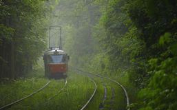 Orange tram tram in the fog of a green forest. Stock Photos