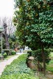 Orange träd i den nationella trädgården eller den kungliga trädgården, Royaltyfria Bilder
