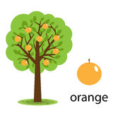 Orange tree stock illustration