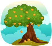 Orange tree. Illustration of landscape orange tree Royalty Free Stock Photo