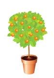 Orange tree Royalty Free Stock Photography