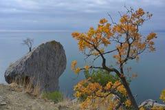 Orange tree against seascape Royalty Free Stock Image