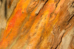 Orange tree bark Stock Photos