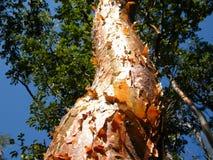 Orange Tree Bark Stock Photo