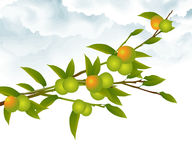 Orange tree branch royalty free illustration