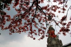 Orange Tree in the Church. In the philippines tanay rizal Stock Images