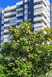 Orange tree in a city Stock Photo