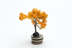 Orange tree on the coins. Orange tree on the coins on a white background Stock Image