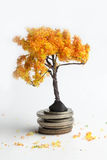 Orange tree on the coins. Royalty Free Stock Photography