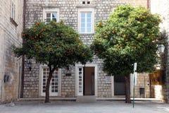 Orange  tree. Dubrovnik Croatia Stock Photos