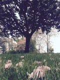orange tree för bakgrundsblomninglövverk Royaltyfri Foto