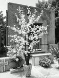 orange tree för bakgrundsblomninglövverk Fotografering för Bildbyråer