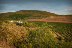Orange Tree Field. In a farm in Algarve - Portugal Stock Image