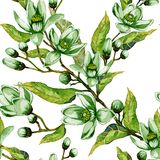 Orange tree flower in green color on a twig. Springtime seamless pattern. Spring flourish. White background. Watercolor painting. Hand drawn illustration Royalty Free Stock Images