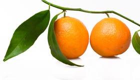 Orange Tree Royalty Free Stock Photos