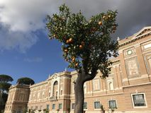 Orange-tree full with oranges in front of Vatican Museum. Beautiful orange-tree Vatican Museum cliuds sky Stock Photography