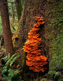 Orange Tree Fungus Stock Photos