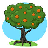 Orange tree illustration. Orange tree cartoon; Citrus tree drawing Stock Photo