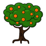 Orange tree illustration. Orange tree isolated on white background Royalty Free Stock Photos