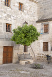 Orange Tree in Juan de Valencia Square, Ubeda Stock Image