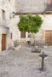 Orange Tree in Juan de Valencia Square, Ubeda Royalty Free Stock Image