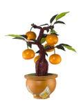 Orange tree model Royalty Free Stock Photos