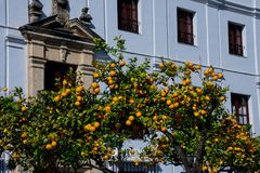 Orange tree with the an old building in the background. Arcos de la Frontera, Spain Royalty Free Stock Photo