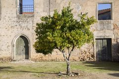 Orange Tree and Old Facade. Portugal Stock Image
