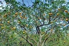 Orange garden stock image