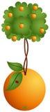 Orange tree in a orange Royalty Free Stock Image
