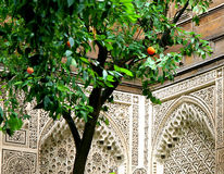 Orange tree in palace courtyard Stock Photos