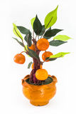 Orange tree plastic Royalty Free Stock Image