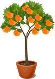 Orange tree in pot Stock Photo