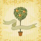 Orange tree in the pot Royalty Free Stock Images