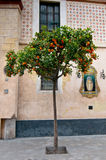 Orange tree, Sevilla, Spain Royalty Free Stock Photos
