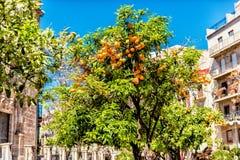 Orange Tree on Town Square in Valencia Spain stock photo