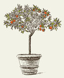 Orange tree. Vector image of a decorative orange tree in a flowerpot Royalty Free Stock Images