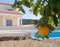 Orange tree and Villa Stock Photo