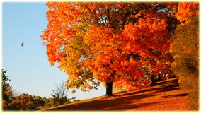 Orange trees autumn forest royalty free stock photos
