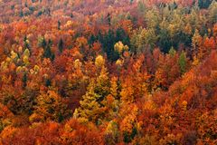 Orange trees. Autumn forest, many trees in hills, orange oak, yellow birch, green spruce, Bohemian Switzerland National Park, Czec Royalty Free Stock Images