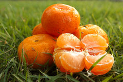 Orange. Trees on the background of grass Stock Image