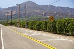 Orange Trees in California Royalty Free Stock Photos