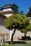 Orange trees in garden, Andalusia, Spain. Royalty Free Stock Photos
