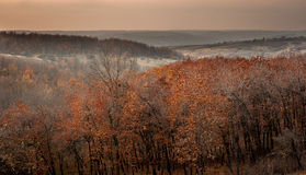Orange trees. Hills and valley are in October. Trees with orange leaves royalty free stock images