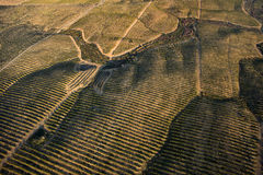 Orange trees plantation. Aerial view Stock Photography