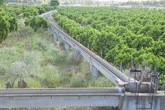 Orange trees plantation at Guadiana Meadows, Spain Stock Photography