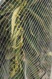 Orange Trees under netting Royalty Free Stock Photo