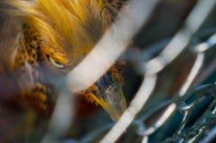 Orange tropical bird Royalty Free Stock Photos